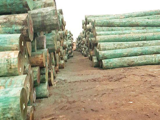 生态板原料